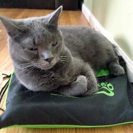 Larry on Drawstring Backpack